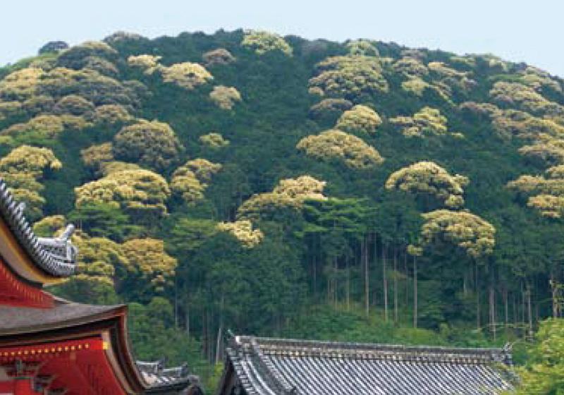 増殖するシイ林