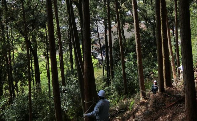 目指す森林像
