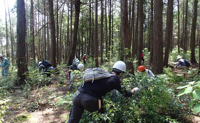 森づくり施業