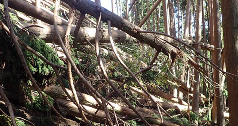 景観的にも美しい京都三山を再生すべく,京都伝統文化の森推進協議会は活動しています。